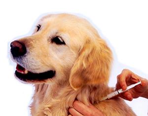 ветеринарная клиника вакцинация против бешенства
